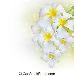 plumeria, fiori, border., terme, frangipani
