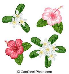 plumeria, fiori tropicali, ibisco, set