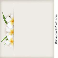 plumeria, flores, fundo