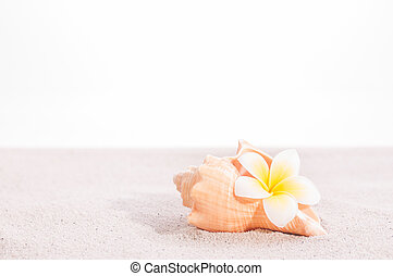 Frangipani flower in a conch shell on sand close-up