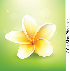 Plumeria flower on nature background, vector illustration
