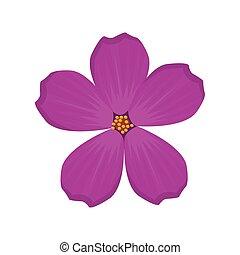 plumeria flower spring image