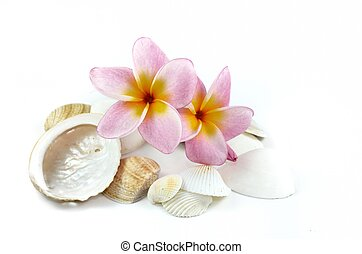 Plumeria flowers and sea shells isolated on white