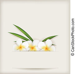 Plumeria flowers background - Plumeria flowers with leaves...