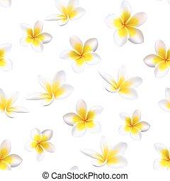 plumeria, flowers., vettore, tropicale, seamless, fondo., modello