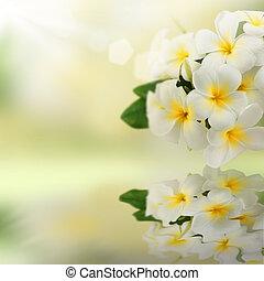 plumeria, refletido, water., flores, spa, frangipani