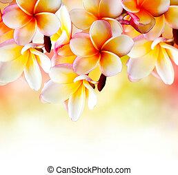plumeria, tropical, flower., frontera, diseño, balneario, ...