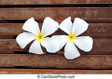 Plumeria White.