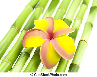 plumeria with bamboo