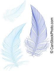 plumes bleu, vecteur, oiseaux