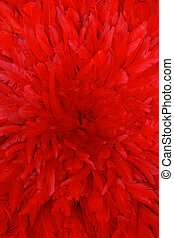 plumes rouges, fond