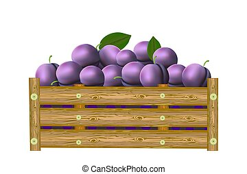 Plums in box isolated on white background. Crate of juicy ...