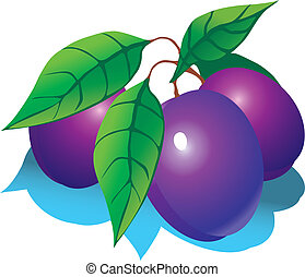 Plums. - Plums with green leaves. Vector illustration on a...