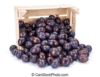 Plums (Prunus) in wooden crate