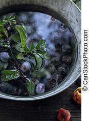 Plums soaking in water in a small tub on old wooden background, closeup view. Sky and trees reflections in water