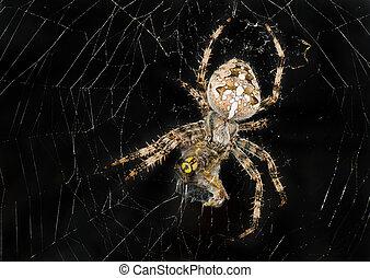 plus loin, toile araignée, sien, manger, victime, emballage haut