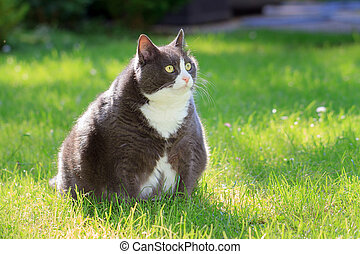 plus sized cutie - Slight obese, or fat, pussy cat outside...