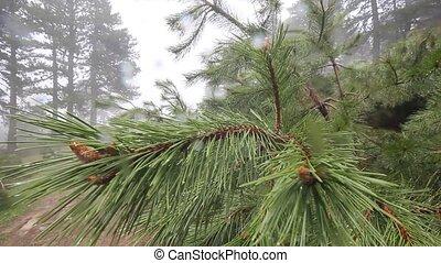 pluvieux, forêt, jour