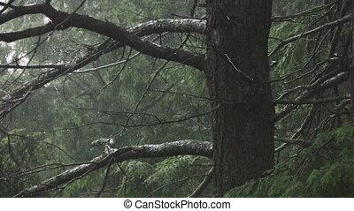 pluvieux, shots., forest., spooky, deux