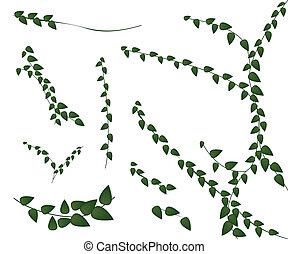 pnącze roślina, komplet, białe tło