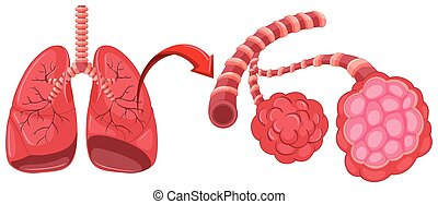 Pneumonia diagram with zoom in lungs illustration