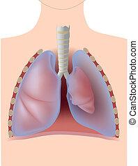 pneumothorax, eps10