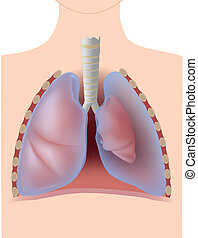 Pneumothorax, a condition where air is accumulated in the pleural space causing lungs to collapse, eps10