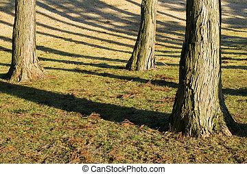 pnie, drzewo, trzy