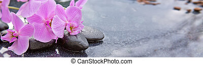 Pnk orchids and black stones close up. - Pink orchid flowers...