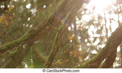 poślubna szklanka, na, przedimek określony przed rzeczownikami, drzewo, projektować, ilustracja, dzwon