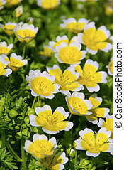 poached egg plant 05