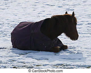 pobre, gelado, cavalo