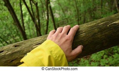 poche, forêt, harmonie, main, humain, vidéo, écologie, ...