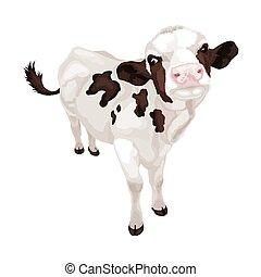 poco, blanco, vaca, con, negro, spots., vector, ilustración
