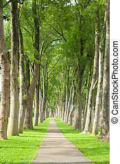 poco, camino, por, fila, de, árboles