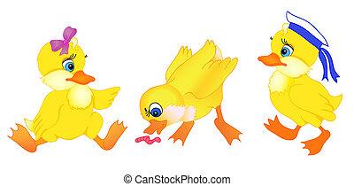 poco, conjunto, caricatura, pato