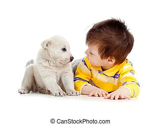 poco, entrenamiento, plano de fondo, blanco, perrito, niño