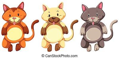 poco, faccia, sciocco, tre, gattini