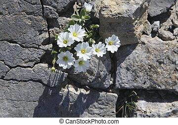 poco, flores