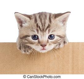 poco, gatito, en, caja de cartón