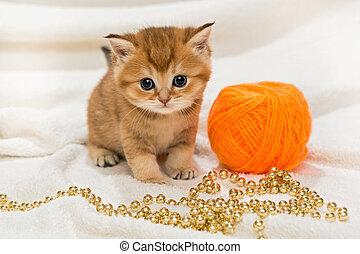 poco, gatito, lana, madeja