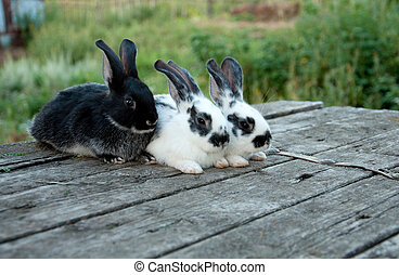 poco, giardino, seduta, legno, tre, coniglio, tavola