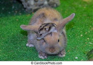 poco, grew, tricolor, since, arriba, hamster., joven, juntos...