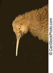 poco, manchado, kiwi
