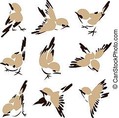 poco, pájaro, ilustración