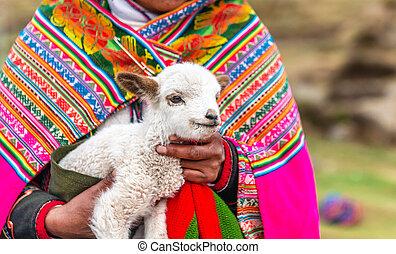 poco, peruano, mujeres, cordero, alpaca