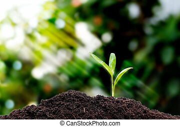 poco, planta, planta de semillero, crecer, .
