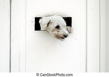 poco, porta, osservare, cane, esterno, bianco