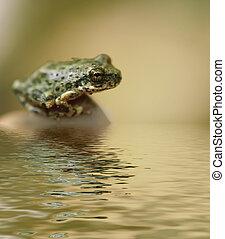poco, rana, sentado, cerca de, agua