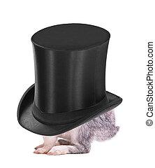 poco, sombrero, conejito